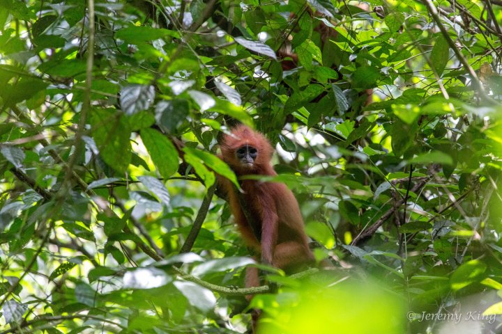 BorneoSandakanTour-0983